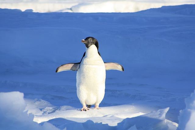ペンギンが持っていないのは舌/歯/耳?|お天気検定8月17日