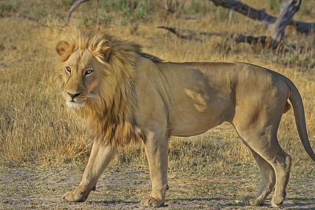 国名がライオンに由来するのはルーマニア/シンガポール?|ことば検定8月6日