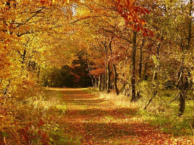 秋の空が高く見えるのは寒暖差?風が弱い?水蒸気?|お天気検定10月25日