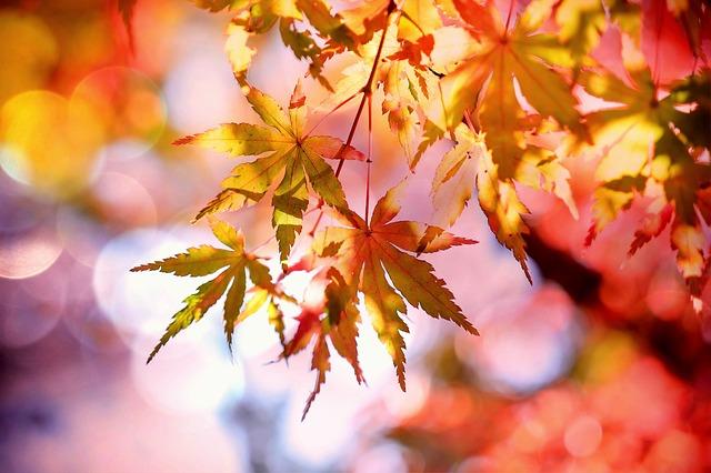 秋風を表す言葉は色なき風?音なき風?光なき風?|お天気検定10月24日