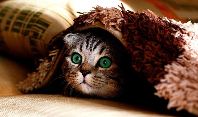 猫が一番感じる味覚は苦み?甘み?酸味?|お天気検定2月22日