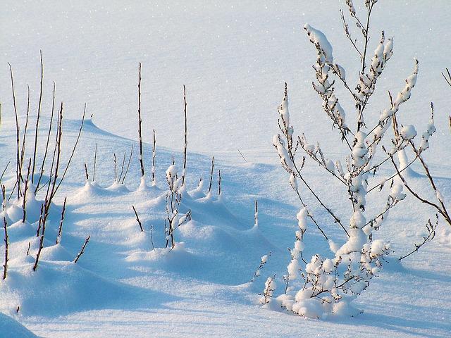 雪やこんこの【こんこ】の意味は深々と降る?もっと降れ?|ことば検定2月15日