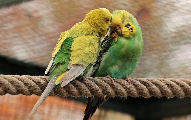 鳥に由来する言葉は雄弁?雌伏?|ことば検定5月10日