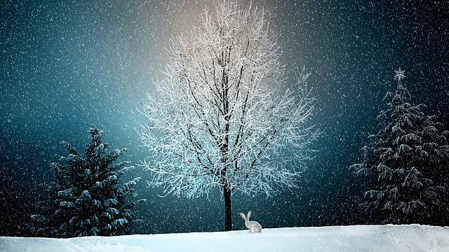 12月25日午前0時に最も積雪しているのは朱鞠内?酸ヶ湯?湯沢?|お天気検定12月25日