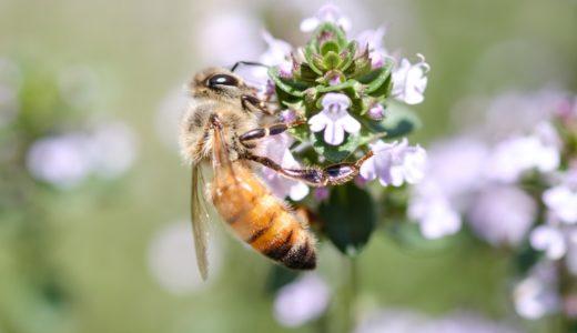 ミツバチの特徴に由来する言葉は?|ことば検定3月8日