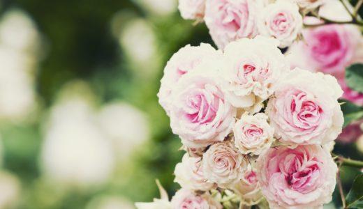バラを県の花にしているのは愛知?広島?茨城?|お天気検定5月22日