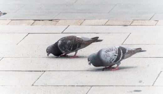 漢字の鳩が使われている言葉は?|ことば検定3月19日