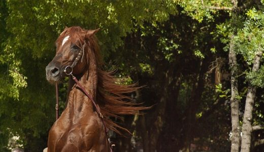 馬脚をあらわすの由来は芝居?古代の馬の競争?|ことば検定9月27日