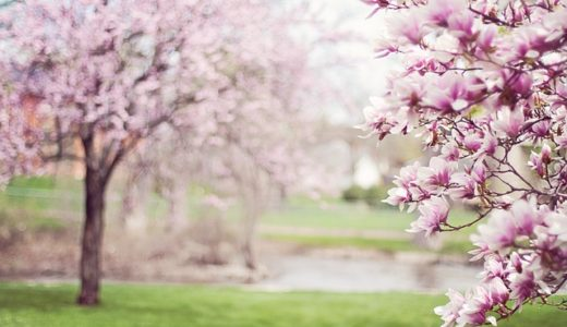 桜が咲く時期に使う表現でないのは花冷え?風花?花霞?|お天気検定3月13日