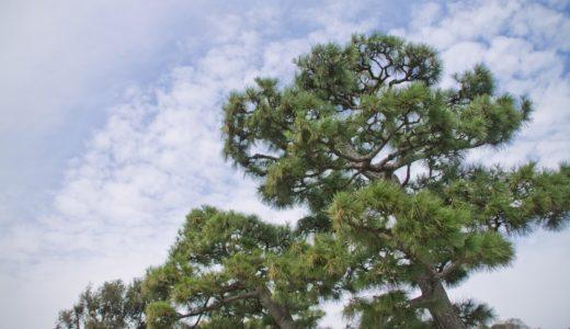 日本のアレルギー症状が出る花粉は約10種類/50種類/100種類?|お天気検定2月4日