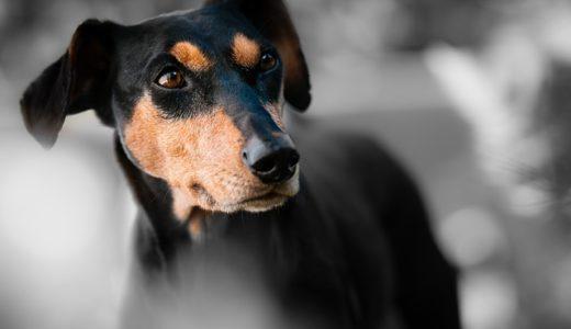 犬の漢字の右上の点は耳?足跡?|ことば検定7月31日