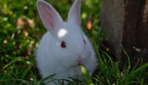 月日そのものを表す動物はツルとカメ?カラスとウサギ?|ことば検定6月26日