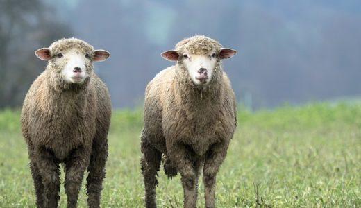 羊羹に羊を使う理由は羊の肉の料理?羊一頭分の価値?|ことば検定6月6日