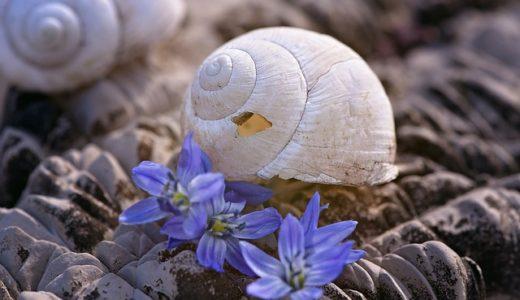カタツムリの殻の特徴、正しいのは成長と共に大/替える/同じ?|お天気検定6月23日