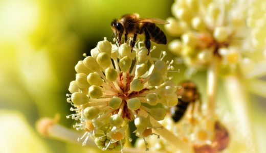 ハンゲショウの葉が白い理由はCO2?虫を集める?日焼け止め?|お天気検定7月2日
