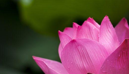 匙のれんげ、名前の由来は蓮の花?重ねて並べられる?|ことば検定7月11日