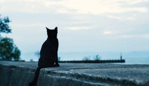 ネコが食べ物の温度を判断するのは鼻?ヒゲ?肉球?|お天気検定10月2日