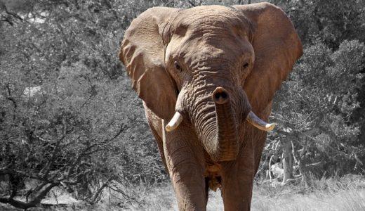 印象の象は像の時に由来?かたちの意味?|ことば検定7月29日