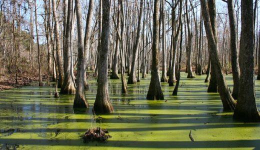 日光国立公園、ラムサール条約で重要なのは湿地?紅葉?サル?|お天気検定10月19日