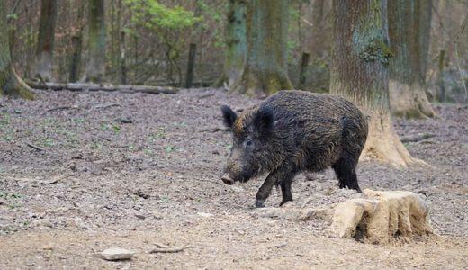 護王神社ゆかりの猪がデザインされたのは硬化?紙幣?勲章?|お天気検定1月4日