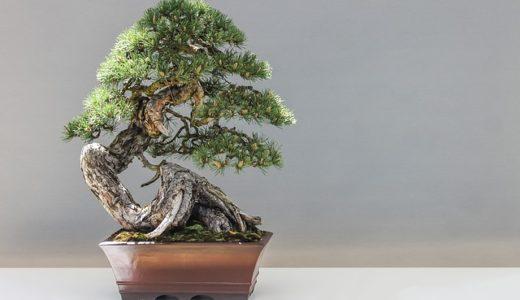 依田司が紹介する3つの盆栽のうち最も高価なのは①?②?③?|お天気検定5月3日