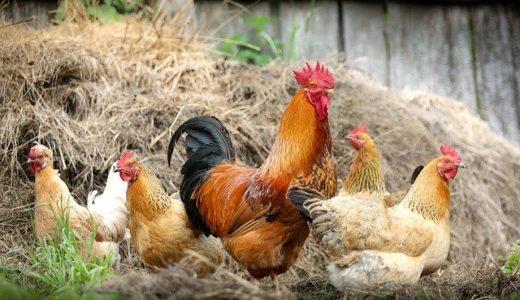 鶏のささみ、名前の由来は笹の葉/刺身?|ことば検定3月3日