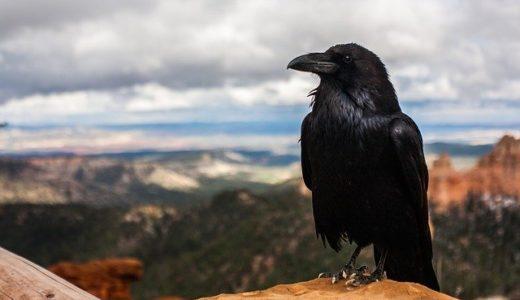 烏の漢字の由来は鳥といえばカラス/体が黒いことに関係?|ことば検定5月5日
