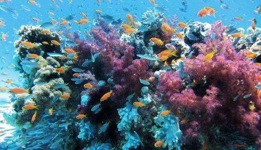 サンゴに由来するとされる島の名前は波照間島/西表島?|ことば検定6月8日